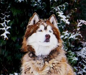 shilohdog-90dpi